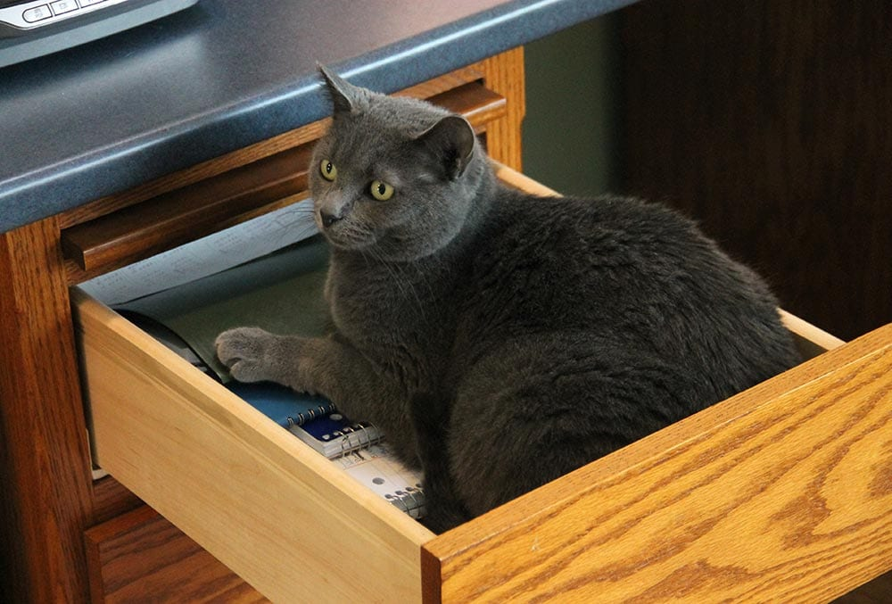 Jasmine in Drawer